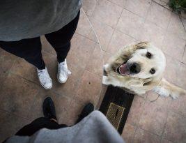 Pet FAQ – Which Pet Should I Choose?