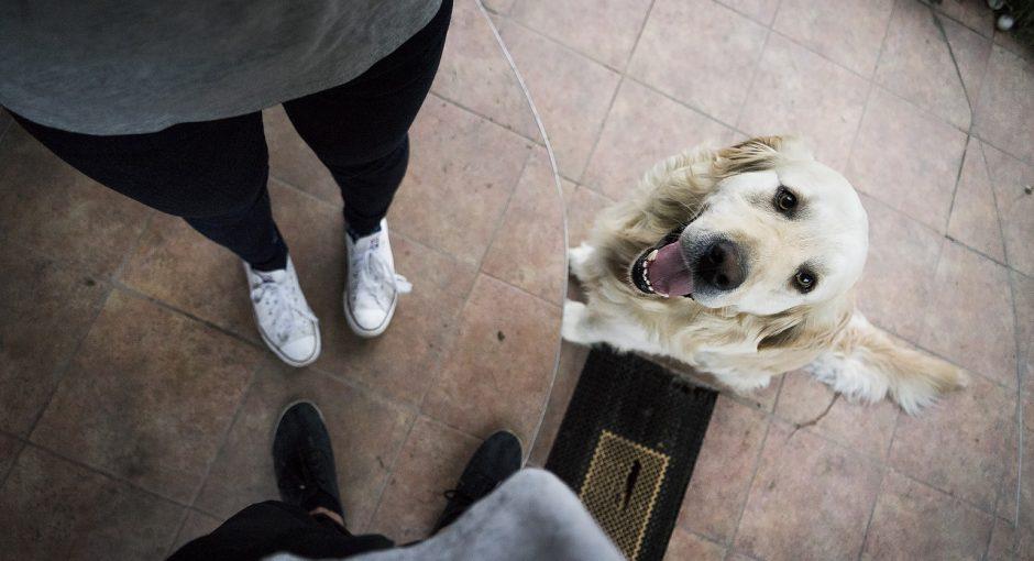 Pet FAQ - Which Pet Should I Choose